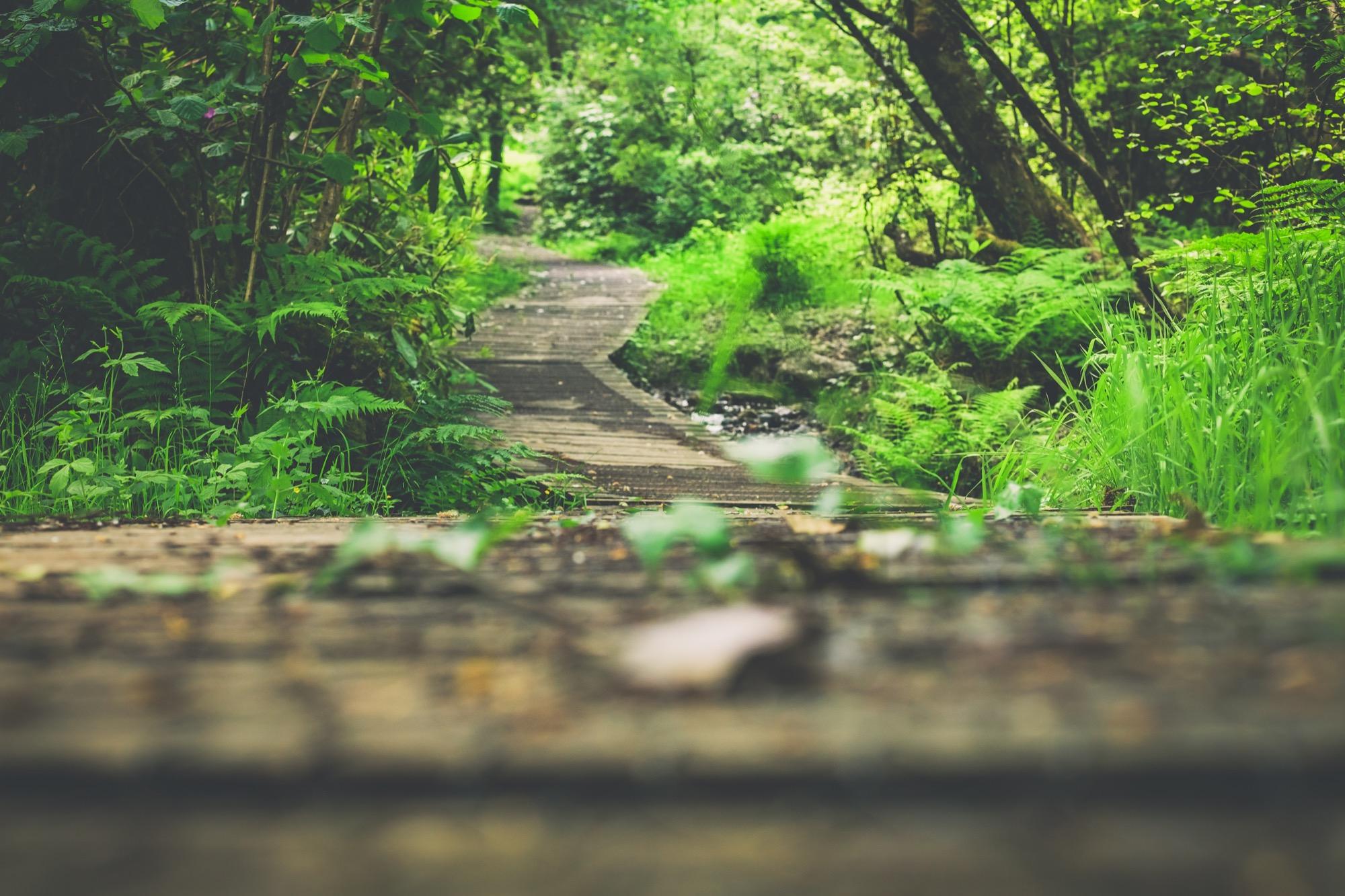 Adventure Lodge - woodland path
