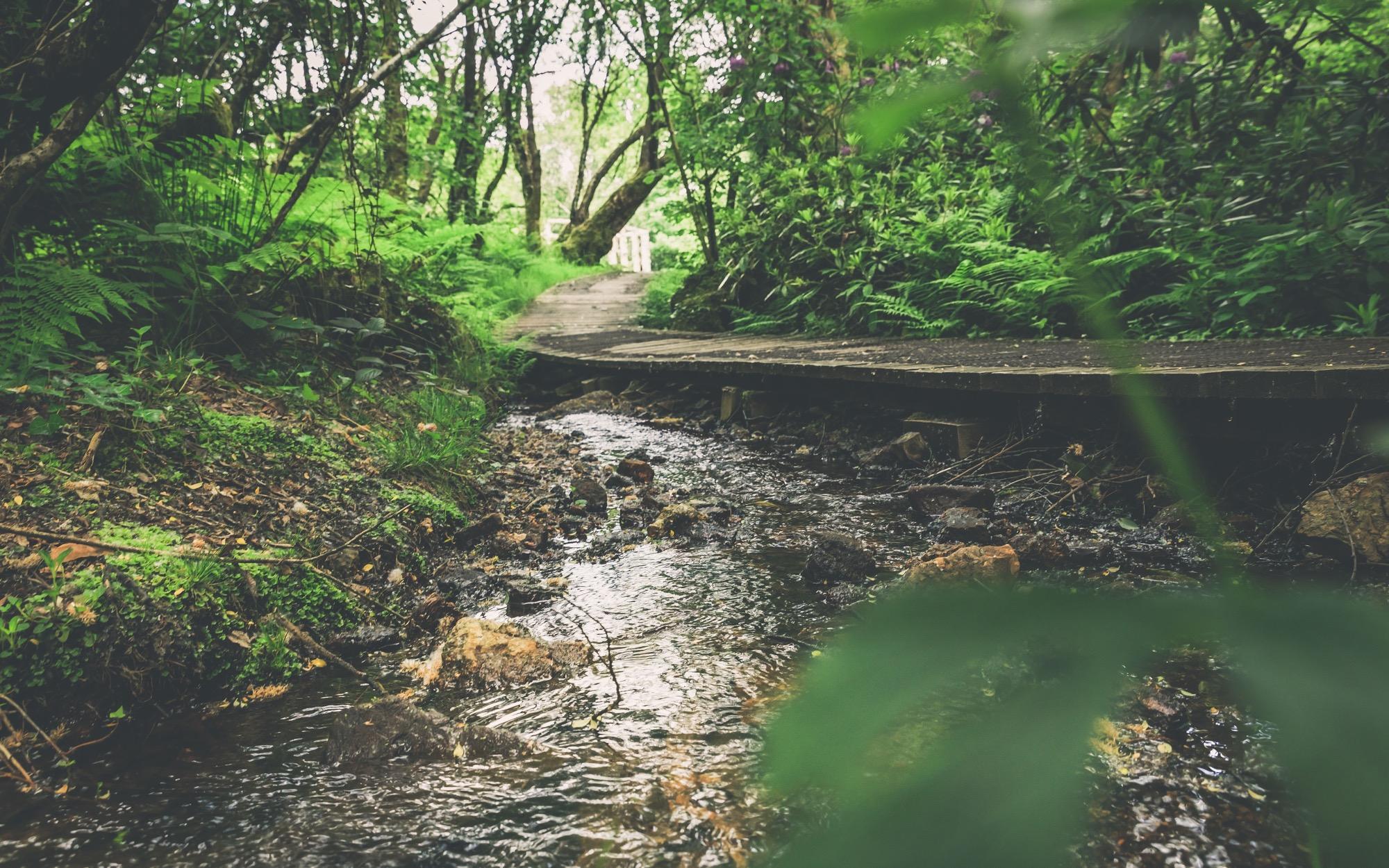 Adventure Lodge - the stream